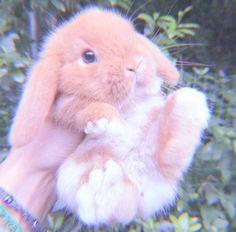 Cute Baby Bunnies, Baby Cats, Cute Babies, Cute Little Animals, Cute Funny Animals, Cute Cats, Cute Bunny Pictures, Cute Animal Photos, Fluffy Animals