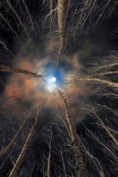 """The moon is friend for the lonesome to talk to."" ~ Carl Sandburg 'Forest & Moon' By Babis Mavrommatis Beautiful Moon, Beautiful Places, Beautiful Pictures, Foto Picture, Shoot The Moon, Moon Pictures, Amazing Nature, Belle Photo, Night Skies"