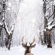 Get a winter wreath that matches your idea of a Winter Wonderland.