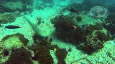 Scuba Diving Local and Phi Phi Islands