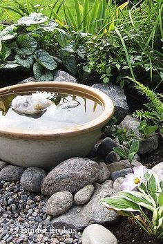 Container water gardens - awesome backyard ponds and water garden landscaping ideas 00025 – Container water gardens Ponds Backyard, Backyard Landscaping, Landscaping Ideas, Landscaping Borders, Pergola Garden, Garden Sofa, Backyard Ideas, Container Water Gardens, Container Gardening