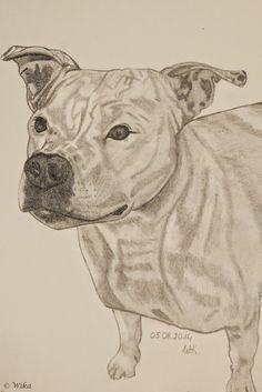 Gabriele Manholds Blog: Wika`s Bleistiftzeichnung von Pit Bull Terrier Amy...