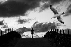 'Birds 4'