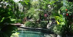 Image result for tropical garden