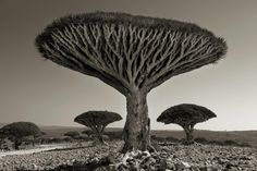 shebehon forest - photography by Beth Moon