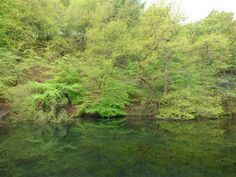 Trees reflected in dam at Gibson Mill in the National Trust estate of Hardcastle Crags near Hebden Bridge Hebden Bridge, Yorkshire Dales, National Trust, Walks, Countryside, Paradise, Trees, Cottage, Spring