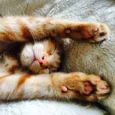 That's it! #Cat #Padgram