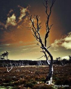 More images from the bus ride to Cradle Mountain National Park Tasmania. Captured and edited on iPhone 6s. #tassie #tasmaniagram #tasmania #australia_oz #australiagram #australiagram_mobile #landscape #landscapes #landscapehunter #landscape_lovers #landscape_captures #natgeo #nature #natureonly #natureaddict #nature_shooters #naturephotography #nature_perfection #natgeolandscape #naturelovers #naturesbeauty #nature_seekers #iphone6sphotography #discovertasmania #busride #cradlemountain…