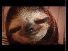 New Animal Planet Meet the Sloths series trailer (2013)