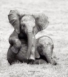 It would be a dream to go work with these babies in AFRICA or wherever.  A Bucket List Dream.