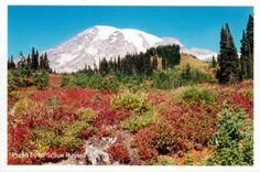 Mount Rainier National Park - Longmire, WA - Read kid-friendly reviews of fun family activities at Trekaroo.com #Trekarooing