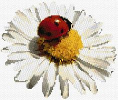 Ladybird on Camomile counted embroidery design. Cross Stitch Pillow, Just Cross Stitch, Cross Stitch Art, Cross Stitch Designs, Cross Stitching, Cross Stitch Embroidery, Cross Stitch Patterns, Hand Embroidery Patterns, Butterfly Cross Stitch