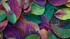 Resultado de imagen para otoño morado