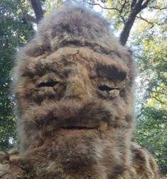 'Bigfoot' seen in North Carolina was a wandering shaman wearing animal skins? Link in comments. Bigfoot Photos, Bigfoot Hunter, Foot Pics, Closer To Nature, Funny Dogs, North Carolina, Beast, Lion Sculpture, Creatures