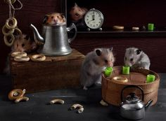"""Unusual Photo Project """"Still Life with Hamsters"""" by Elena Eremina"""