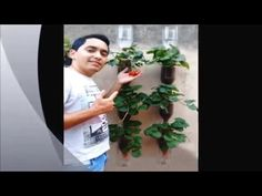 Como Plantar Árvore Frutifera na Garrafa Pet - YouTube