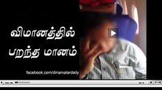 விமானத்தில் பறந்த மானம் #விமானம் #மானம்...  மேலும் படிக்க : http://www.dinamalar.com/video_inner.asp?news_id=33707&cat=32