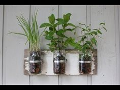 You'll be able to have a continuous supply of seasonal fresh herbs on hand in your kitchen with this easy Mason Jar Herb Garden. We've included lots of ideas that will inspire and delight plus instructions on how to make them. You will also love the clever trick to freezing your herbs.