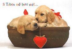 Vzkazy Feel Good, Labrador Retriever, Feelings, Funny, Dogs, Animals, People, Photography, Lava