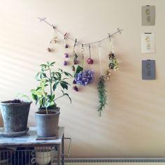 ドライフラワー 壁のディスプレイのインテリア実例 | RoomClip (ルームクリップ)