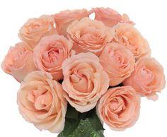FiftyFlowers.com - Perfumela Peach Garden Roses