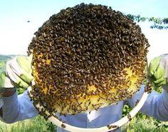Bienenkugel - Home