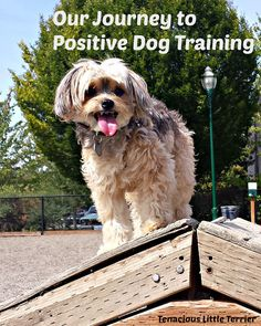 Positive #DogTrainin
