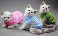 Cat Sweater – Accessories & Products for Cats  20% off