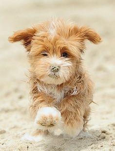 Beautiful Beach Doggie Love Moments