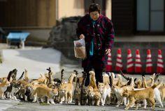 gatos de Aoshima