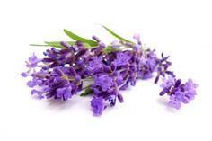 Effect of aromatherapy on the quality of sleep…