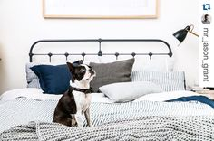 The gorgeous Sophia looking perfectly at home on the Scout Iron bed also featuring major minor linen.