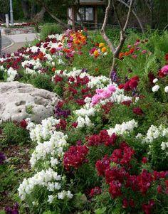 Spring at the Zilker Botanical Garden, Austin, Texas. Photo: Allan Howard.