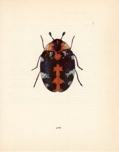 1000 Images About Beetles Prints On Pinterest Beetle