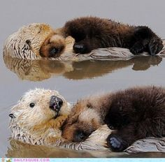 if these otters cuddling isn't the cutest thing ever, then I don't know what is