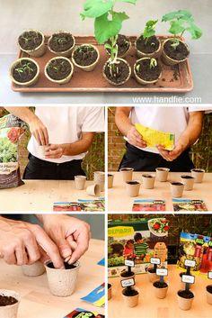 Crea un mini huerto de verduras y hortalizas con el que los niños disfrutarán sembrando sus propias semillas.