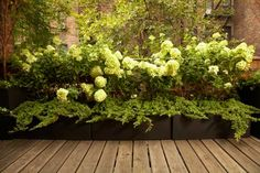 hydrangeas in a container is a really interesting idea, but won't they need lots of watering? would i be able to put them in the retaining wall of the patio?