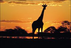 Safari at Kruger National Park, South Africa