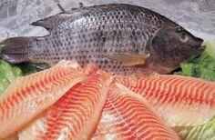 Barato e de sabor suave, esse peixe, infelizmente, pode desencadear problemas de saúde.