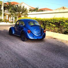Brazilian Bug 1979