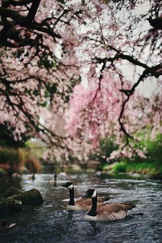 """r2–d2: """" Every Spring is the Only Spring by manyfires """""""