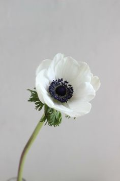 Anemones, we like these a lot, will try and get but is small chance they will not be available.