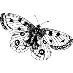 StampaFe Art Stamps::StampaFe::Animals::Spotted Butterfly