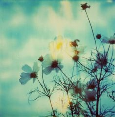 Nature Daisy Flowers Green Photography Print Flower Landscape Green Picture Photo - Fine Art Photography Polaroid Boho Nature