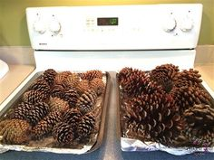 How to Prepare Pine Cones for Wreaths