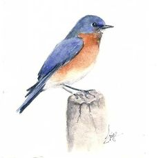 Instruction for Beginner Watercolor Bluebird