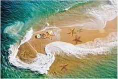 3D Flooring waterproof wall paper Starfish