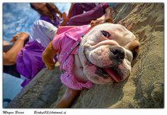 Funny Bulldog