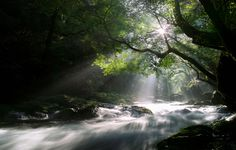 pictures of trees with sun rays | Wallpaper nature, forest, night, trees, light rays, the sun, a stream ...