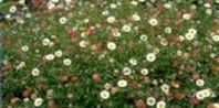 Flowers to Plant in Very Dry Soil | eHow.com